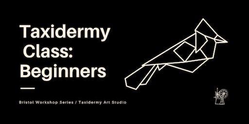 Taxidermy Class: Beginners // Bristol Workshop Series