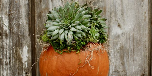 Succulent Pumpkin Workshop - Fishers