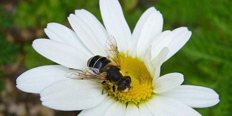 Basics of Agricultural Beekeeping tickets