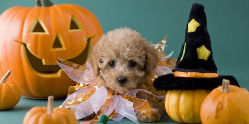 Howl- O - Ween  Costume  Cruise for Dogs
