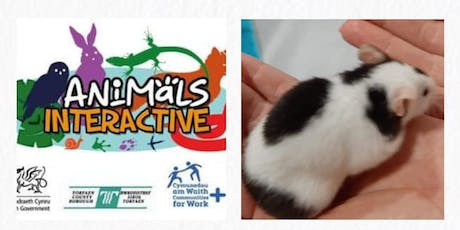 Animals interactive at the park tickets