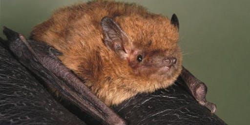 Wildlife Watch Bat Walk