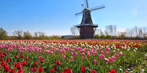 Holland Tulips Day Trip