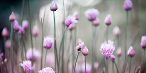 Weeding Your Energy Garden : Energy Hygiene for Everyone
