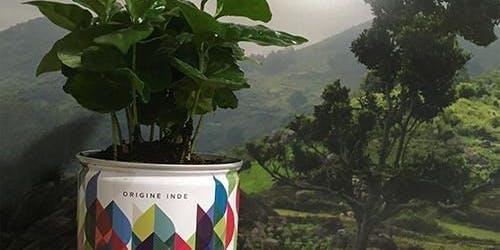Atelier plantation de caféiers