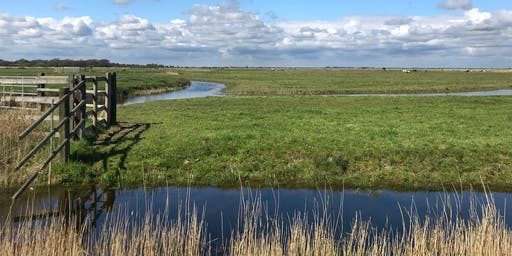 Broads Land Management Service - Managing wet grassland to benefit wildlife