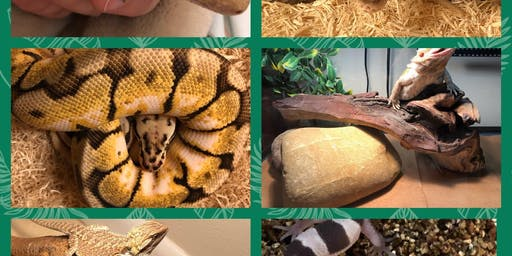 National Reptile Awareness Day Interactive Reptile Experience