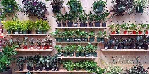 Houseplant 101 - A Beginner's Guide to Plant Parenthood