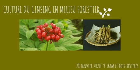 FORMATION: CULTURE DU GINSENG EN MILIEU FORESTIER billets