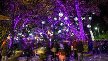 """L.A. Zoo Lights"": A Wild Wonderland of Light"