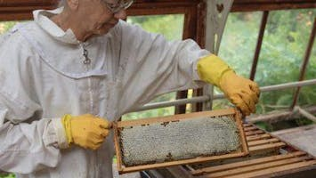 Bee responsible - Make your own bees wax wrap and furniture polish