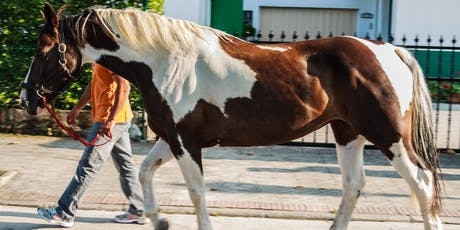 Focus After 50: HALTER Therapeutic Riding Center Tour tickets