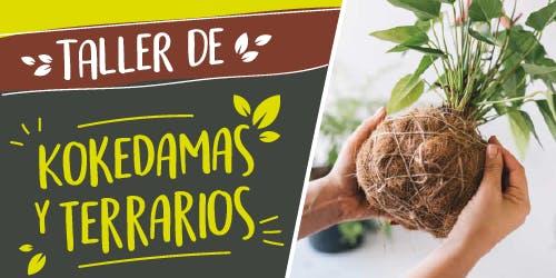 Taller Kokedamas y Terrarios. Momentos Creativos octubre 2019
