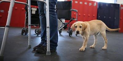 Aspiring Therapy Dog Class