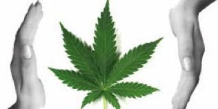 GET YOUR MEDICAL MMJ CARD AND SAVE UP TO 35% ON TAXES - FREE ONLINE INFO SESSION HOSTED BY CHICAGO COMPASSION CLUB