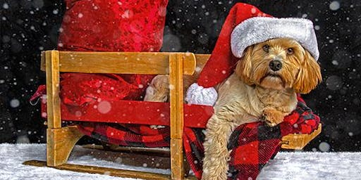 Jingle Paws: Holiday Pet Portraits