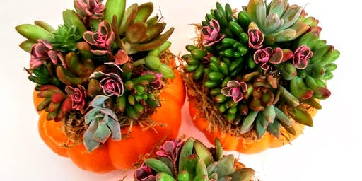 Mini Succulent Pumpkin Workshop (morning,11am-12pm)