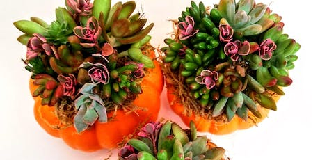 Mini Succulent Pumpkin Workshop (afternoon, 1pm-2pm) tickets
