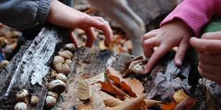 Mushroom Mania: Family Hike