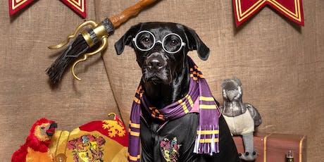 Dog Friendly Angus & Dundee present - DOGWARTS tickets