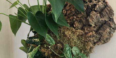 Mounting an Epiphytic Plant on Natural Cork tickets