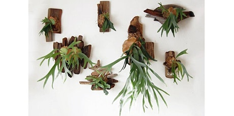 DIY Mounted Fern! (06-12-2020 starts at 6:00 PM) tickets