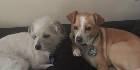 Pet Adoptions tickets