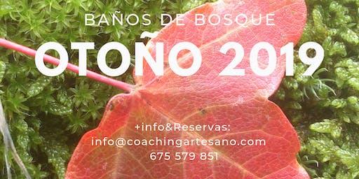 Baño de Bosque 10 Nov. - Otoño en Bosque de la Herreria, El Escorial