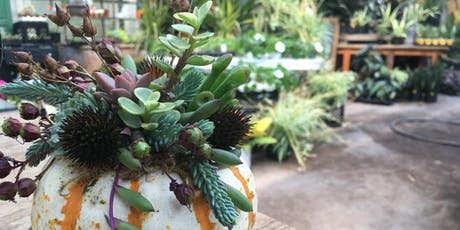 Craft Lab: Succulent-topped Pumpkins (small) tickets
