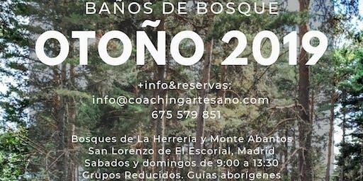 Baño de Bosque 17 Nov. - Otoño en Bosque de la Herreria, El Escorial