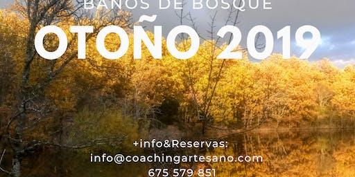 Baño de Bosque 23 Nov. - Otoño en Bosque de la Herreria, El Escorial