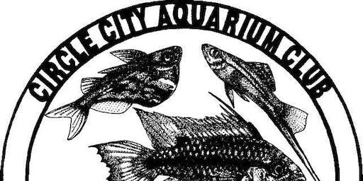 Circle City Aquarium Club November Meeting