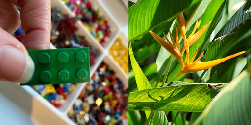 Plants Inspirational Coaching© con LEGO®  SERIOUS PLAY®