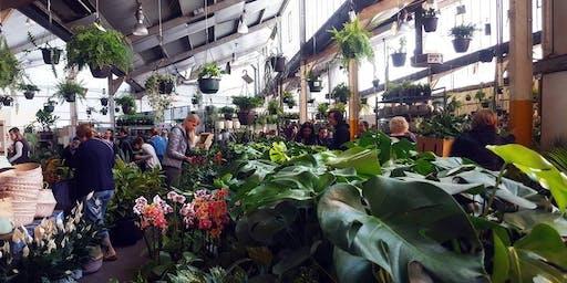 Adelaide - Huge Indoor Plant Sale - Rumble in the Jungle