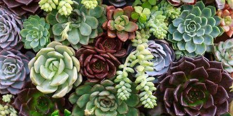 Garden Club's Succulent Workshop Event