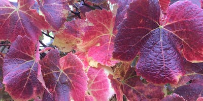 Gourmet Girls Autumnal Feast!