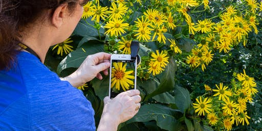 Smartphone photography: iPhone basics and beyond Workshop - Herndon, VA