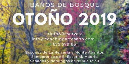 Baño de Bosque 30 Nov. - Otoño en Bosque de la Herreria, El Escorial