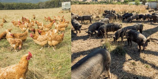 Small-scale pig and poultry farm planning workshops (Lismore, Vic)