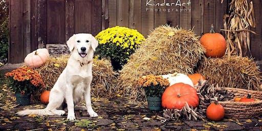 Fundraising for Vafa Dog Shelter