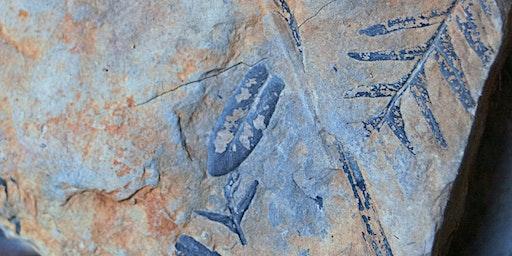 Gondwana Fossil Forest ramble