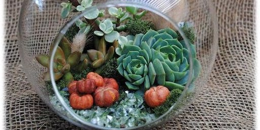 Create your own fall themed Live Succulent Terrarium