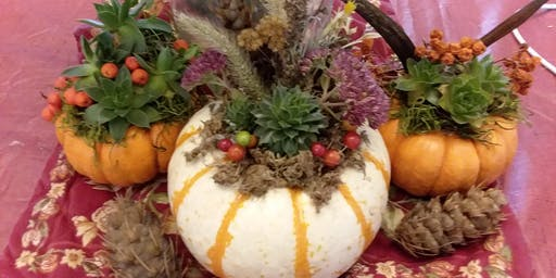 Pumpkins and Succulents Workshop