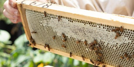 Backyard Bees Workshop at Green Space with Backyard Beekeeping Ballarat tickets