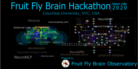 Fruit Fly Brain Hackathon 2020 tickets