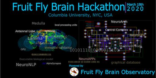 Fruit Fly Brain Hackathon 2020
