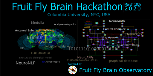Fruit Fly Brain Hackathon 2020