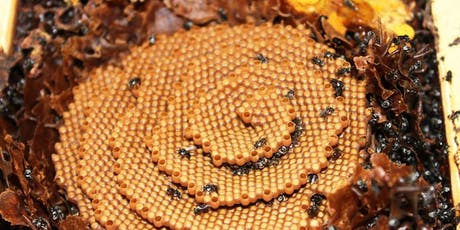 NBB monthly meeting - Native Stingless Bees tickets