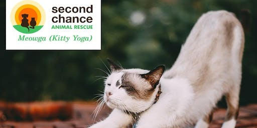 Cat Yoga at Second Chance Animal Rescue