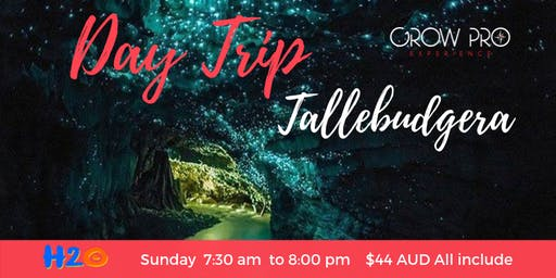 DAY TRIP- TALLEBUDGERA